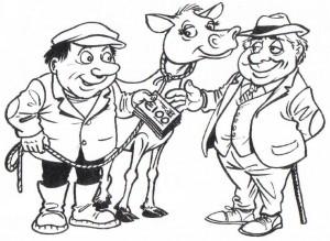 Gene Ireland starts purchasing beef bulls
