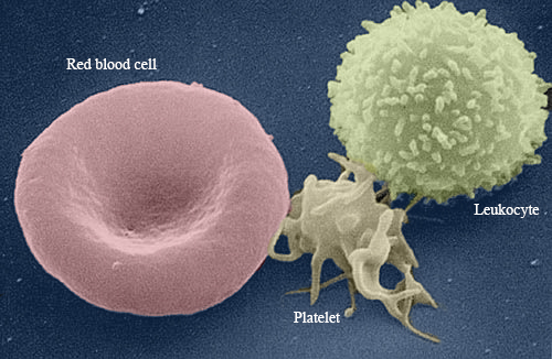 how to build up white blood cells