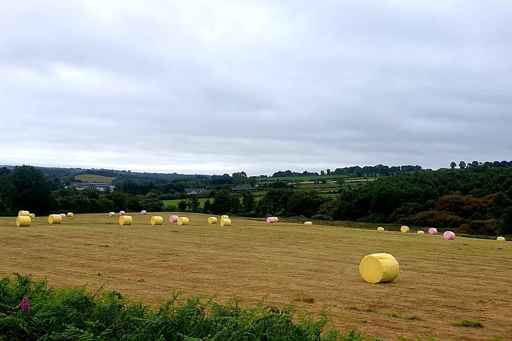 Peter Hynes – Trailer after trailer load of coloured bales