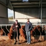 FBD €uro-Star €200 Pedigree Beef Finalist – Fermoyle herd makes tremendous strides in herd fertility